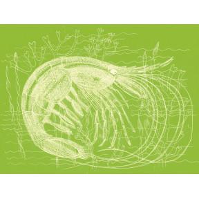 Green Prawn A4