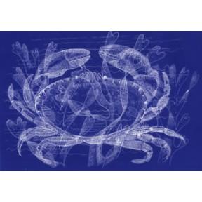 Crab . A4. Blue.