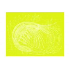 Lime Prawn Print