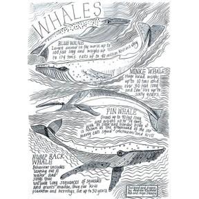 Whales .A4
